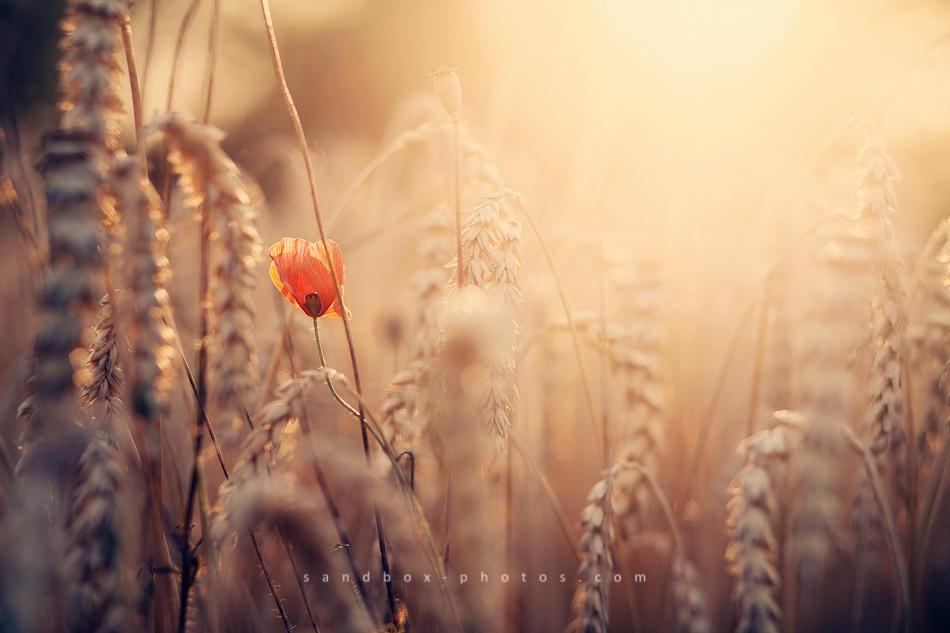 Summer by Maegondo