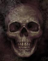 human skull by RogerStork