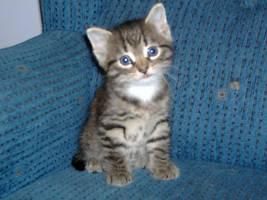 Kitten by nsledzik