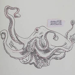 To Burger or Not to Burger Octopus by natasian