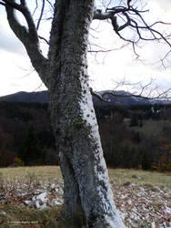 Ofuknuty buk by Azraelangelo-photo
