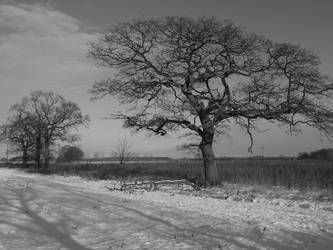 Winter Trees Yorkshire by davepphotographer