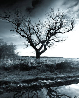 The Old Tree Yorkshire by davepphotographer