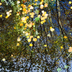 Reflections on Autumn by davepphotographer