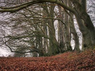 Sharpenhoe Woods by davepphotographer