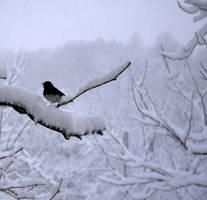 Bird on a Branch by Oiseauii