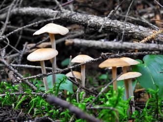 Mushrooms by xJaneirax