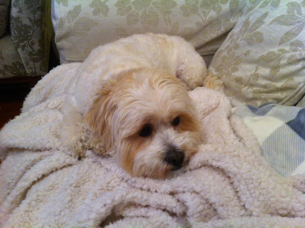Buffy the Fluffy Puppy by DreamingDaysAway