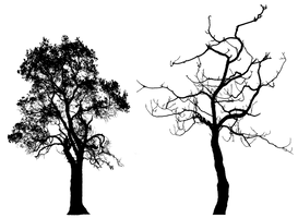 Tree Silhouette Pack 001 - HB593200 by hb593200