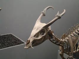 Skull 2 by DandyStock