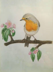 Robin with apple blossom by Emi-Ookami