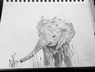 The Elephant Toddler by nranddg