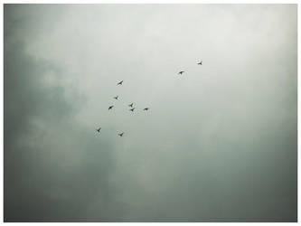 Flying Birds by J-girl96