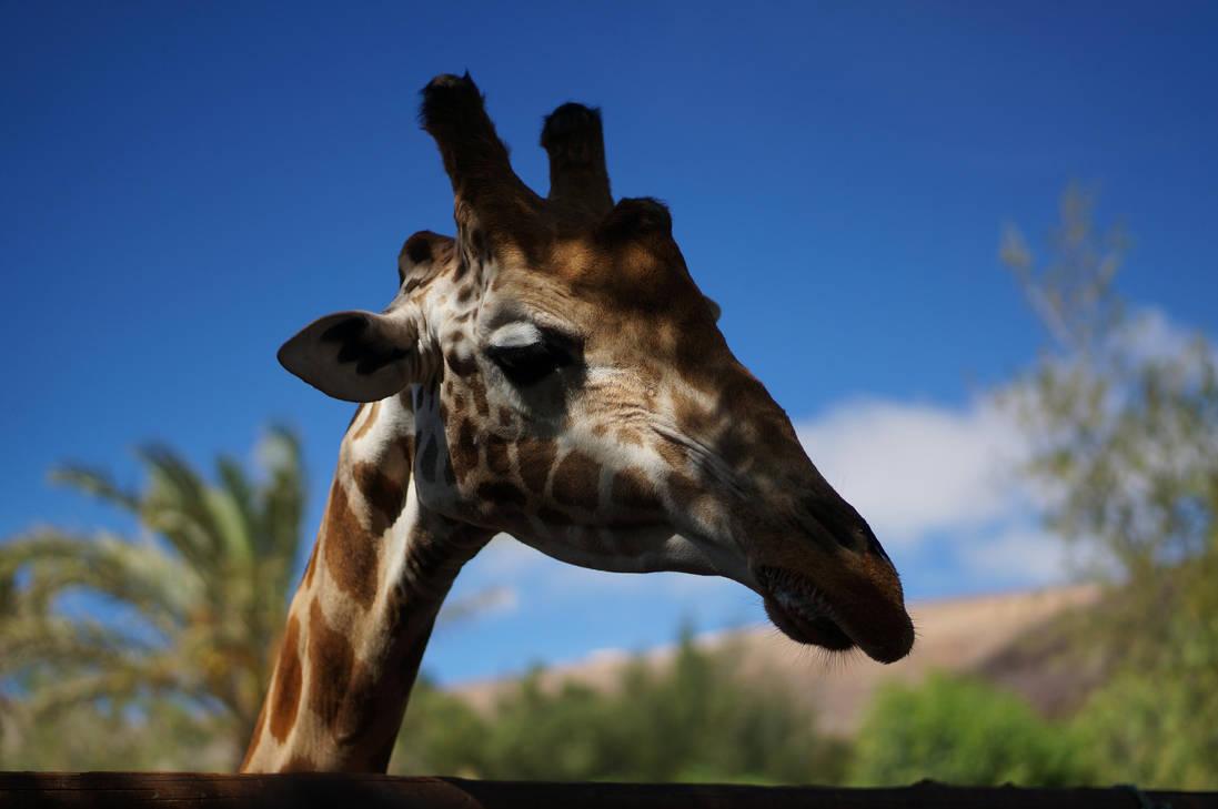 Sad giraffe by darthsabe