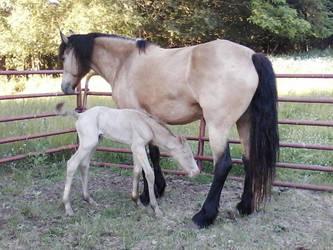 new colt by JazmyneReede