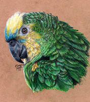 Blue-Fronted Amazon by KristynJanelle