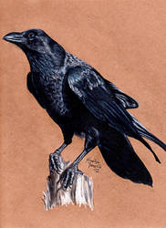 Raven by KristynJanelle