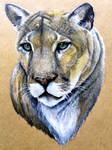 Cougar by KristynJanelle