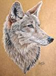 Coyote by KristynJanelle