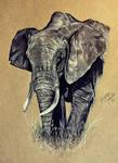 Elephant by KristynJanelle