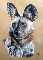 African Wild Dog by KristynJanelle