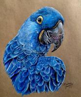 Hyacinth Macaw by KristynJanelle