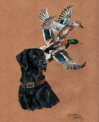Shadow the Black Lab by KristynJanelle