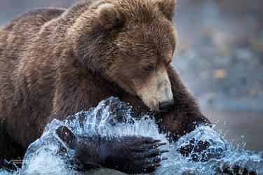 Bear by vinayan