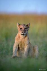 Lion King by vinayan