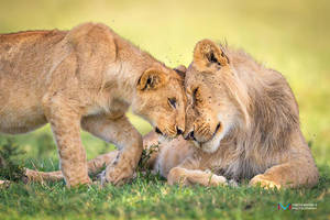 Affection by vinayan