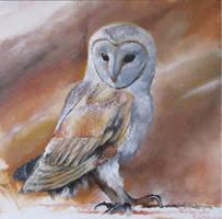 Barn owl 2 by erlend-se