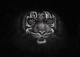 Dark Tiger by Sushi-666