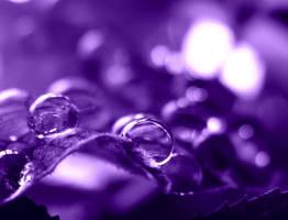 purple. by Aparazita-R