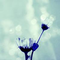 blue weather by Aparazita-R