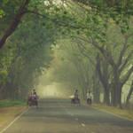 misty green by Aparazita-R