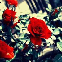 blood red by Aparazita-R
