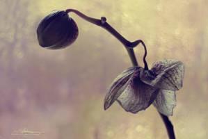 Life, Death nd Rebirth: Part 1 by Mischx