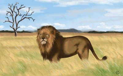 Lion Africain by Kilinah