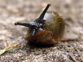 slug by Cyrex-by-WD