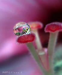 fancy droplet by sinanTR