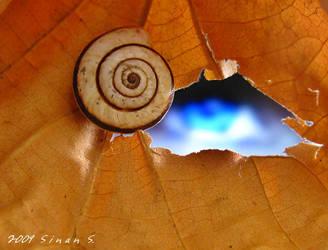 The Shell-eye by sinanTR