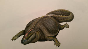 placodus by spinosaurus1