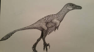 Saurornitholestes sullivani by spinosaurus1