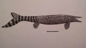 clidastes by spinosaurus1