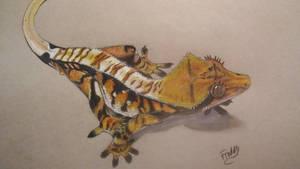 eyelashed crested gecko by spinosaurus1
