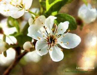 flower by eLFoxy