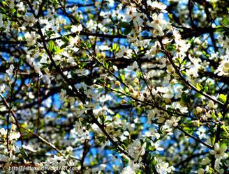 spring o.o2 by eLFoxy