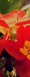 flowers o.o2 by eLFoxy