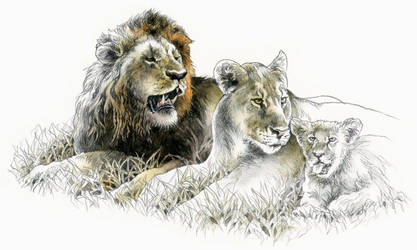 African Lion group by RobertMancini