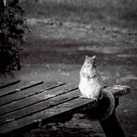 Portrait of a Squirrel by KatiBear